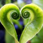 heart-curl